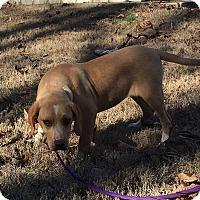 Adopt A Pet :: Cher - Plainfield, CT