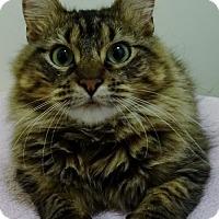 Adopt A Pet :: Sasha - Mt. Vernon, NY