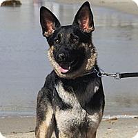 Adopt A Pet :: Naomi - Laguna Niguel, CA