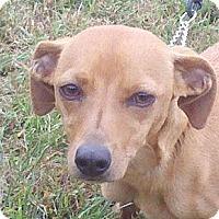Adopt A Pet :: Sophia ($75 off) - Brattleboro, VT