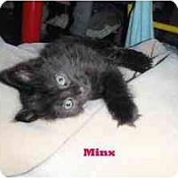 Adopt A Pet :: Minx - Milwaukee, WI
