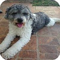 Adopt A Pet :: George Burns - Austin, TX