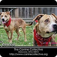 Adopt A Pet :: Romeo - Delaware, OH