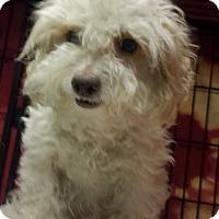 Adopt A Pet :: Charlotte - Chicago, IL