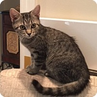 Adopt A Pet :: Simone - Birmingham, AL