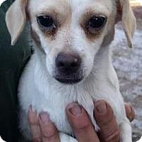 Adopt A Pet :: Felicity - Gainesville, FL