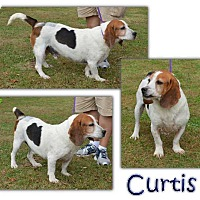 Adopt A Pet :: Curtis - Marietta, GA