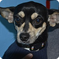 Adopt A Pet :: Leo - Meridian, ID