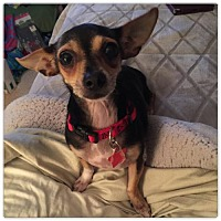 Adopt A Pet :: Minnie - Holly Springs, NC