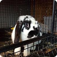 Adopt A Pet :: Perdita - Conshohocken, PA