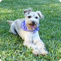 Adopt A Pet :: Caroline - Mocksville, NC