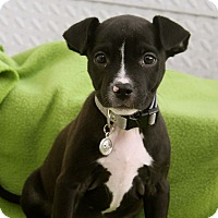 Adopt A Pet :: Dionne - Los Angeles, CA