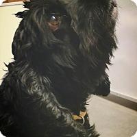Adopt A Pet :: Sirius - Seattle, WA