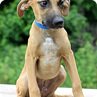 Adopt A Pet :: Jaja - Waldorf, MD