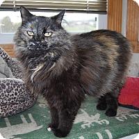Adopt A Pet :: Dusty - Ridgway, CO