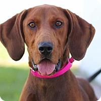 Adopt A Pet :: Chloe - Colorado Springs, CO