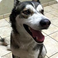 Adopt A Pet :: Vinnie - North Las Vegas, NV