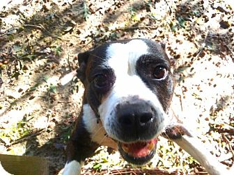 Terrier (Unknown Type, Medium) Mix Dog for adoption in Silver Spring, Maryland - LOLA