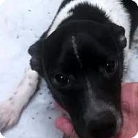 Adopt A Pet :: Otis - Sudbury, MA