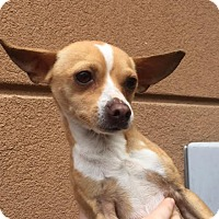 Adopt A Pet :: Earl - Westminster, CA
