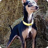 Adopt A Pet :: Taquito - Joplin, MO