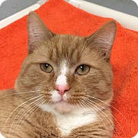 Adopt A Pet :: Thurston - Norwalk, CT