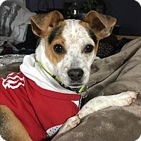 Adopt A Pet :: Pongo - Tehachapi, CA