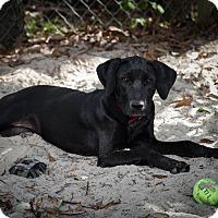 Adopt A Pet :: Lady Clinton - Weeki Wachee, FL