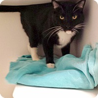 Adopt A Pet :: Chief - North Las Vegas, NV