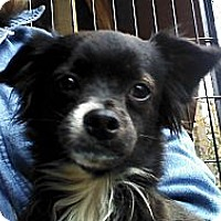 Adopt A Pet :: Bits - Brattleboro, VT