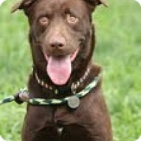 Adopt A Pet :: Stewie - Lewisville, IN