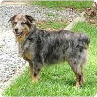 Adopt A Pet :: Roger - Orlando, FL
