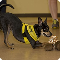 Adopt A Pet :: Sassy - Baton Rouge, LA