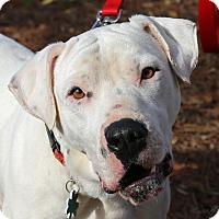 Adopt A Pet :: Rylan - Alpharetta, GA