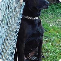 Adopt A Pet :: Winona-010802j - Tupelo, MS