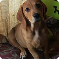 Adopt A Pet :: Mia - Charlestown, RI