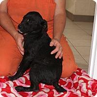 Adopt A Pet :: Frank - Harmony, Glocester, RI