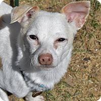Adopt A Pet :: Ellis - Meridian, ID