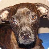 Adopt A Pet :: Luke - Foster Care - Oxford, MS