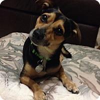 Adopt A Pet :: Rex - Windermere, FL