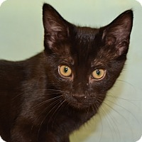 Adopt A Pet :: Marigold - Larned, KS