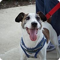 Adopt A Pet :: Reno - Sparta, NJ