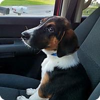 Adopt A Pet :: Mac (cr) - Harrisonburg, VA
