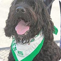 Adopt A Pet :: JASPER - Clayton, NJ