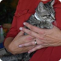 Adopt A Pet :: Sara - Surrey, BC
