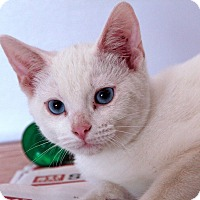 Adopt A Pet :: Dulin - St. Louis, MO