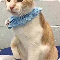Adopt A Pet :: Quinn - St. Louis, MO
