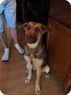 Shepherd (Unknown Type) Mix Dog for adoption in Tuskegee, Alabama - Gretel