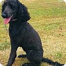 Adopt A Pet :: Lollie