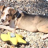 Adopt A Pet :: Pebbles - Cairo, GA